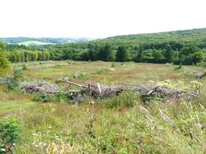 industrialisation de la forêt pour un profit immédiat,  au détriment de l'environnement, de l'eau, de la biodiversité ...